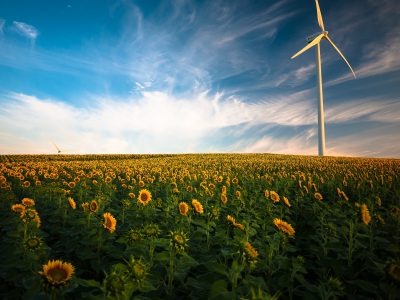 photo windmill field sunflowers